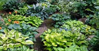 Organic Landscaping Las Vegas Nv Chop Chop Landscaping Las Vegas Nv